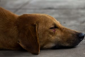 Dog Stabbed in Outlandish Subway Fight